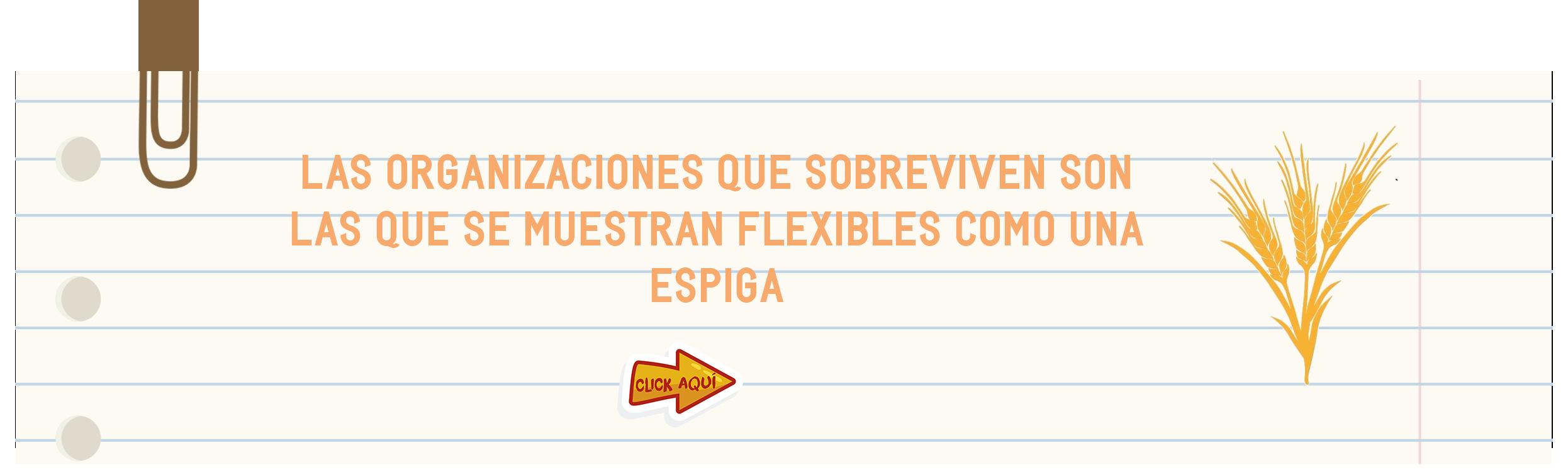 flexibilidad_psicologica_cultura_organizacional.png
